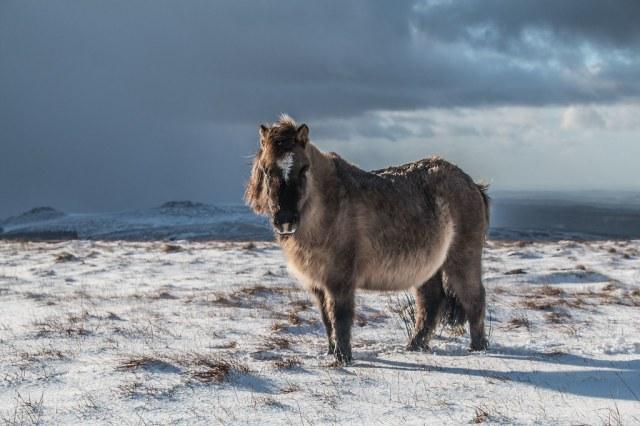 Winter on the Moor