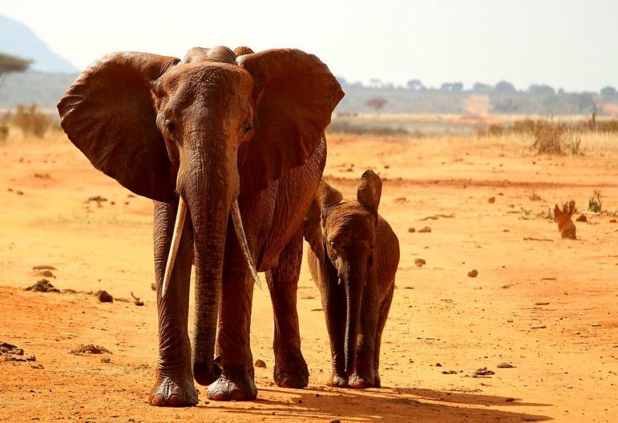 elephant-2241360_1920