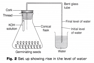 cbse-class-10-science-lab-manual-co2-released-respiration-5