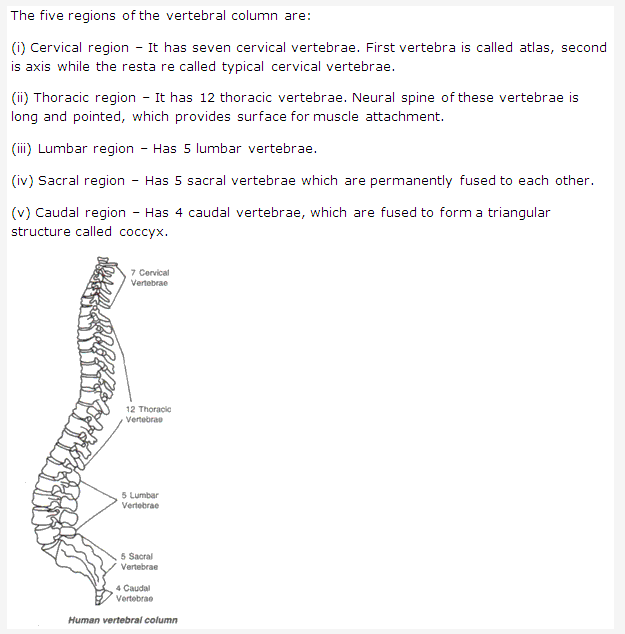 Frank Icse Solutions For Class 9 Biology The Skeletal System A