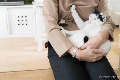 アトリエイエネコ Cat Photographer 40604163291_8b357f3514 1日1猫!保護猫カフェ&猫ホテルねこんチ新入りスタッフシロちゃん♪ 1日1猫!  里親様募集中 猫写真 猫 子猫 大阪 初心者 写真 保護猫カフェねこんチ 保護猫カフェ 保護猫 ハチワレ スマホ カメラ Kitten Cute cat
