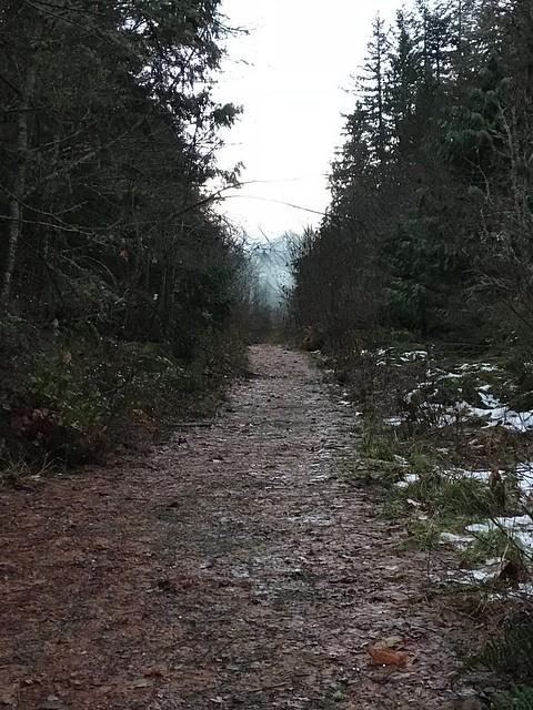 Elwah trail