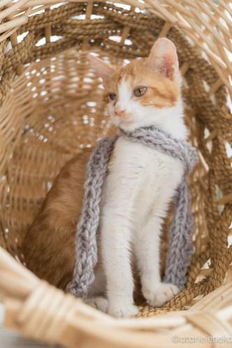 アトリエイエネコ Cat Photographer 39246996544_0fa12e4d57 1日1猫!高槻ねこのおうち 里親様募集中のルルちゃん♪ 1日1猫!  高槻ねこのおうち 里親様募集中 猫写真 猫 子猫 大阪 写真 保護猫 Kitten Cute cat