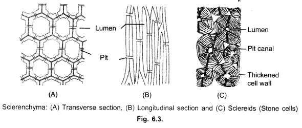 onion epidermal cell labeled diagram
