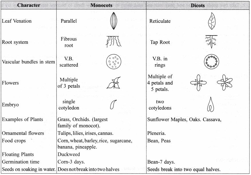 ncert class 9 science lab manual – features of monocot and dicot plants