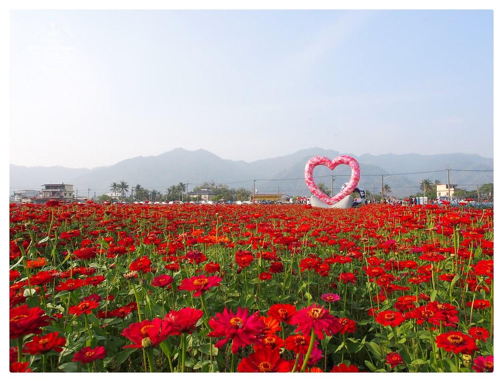 波斯菊花海,美濃中正湖,美濃花海,走春景點,高雄景點 @薇樂莉 Love Viaggio   旅行.生活.攝影