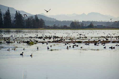 Skagit Morning Birds-7