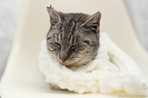 アトリエイエネコ Cat Photographer 39653999812_99c5596cb6 1日1猫!高槻ねこのおうち 里親募集中のミー助君♪ 1日1猫!  高槻ねこのおうち 里親様募集中 猫写真 猫 子猫 大阪 写真 保護猫 スマホ カメラ Lightroom Kitten Cute cat