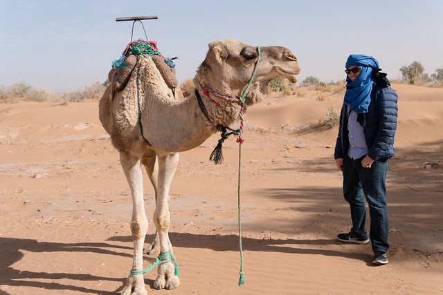 Conversing with camel in the Sahara