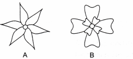 ncert-class-9-science-lab-manual-features-of-monocot-and-dicot-plants-8