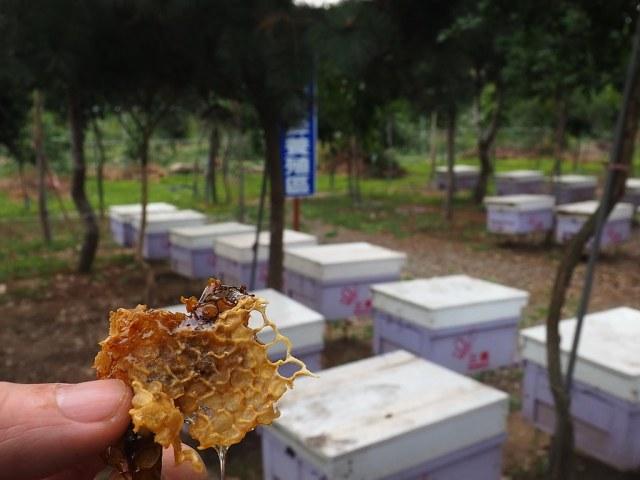 古坑三美養蜂 (19)