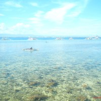 San Vicente Marine Sanctuary: A Developing Success in Marine Conservation