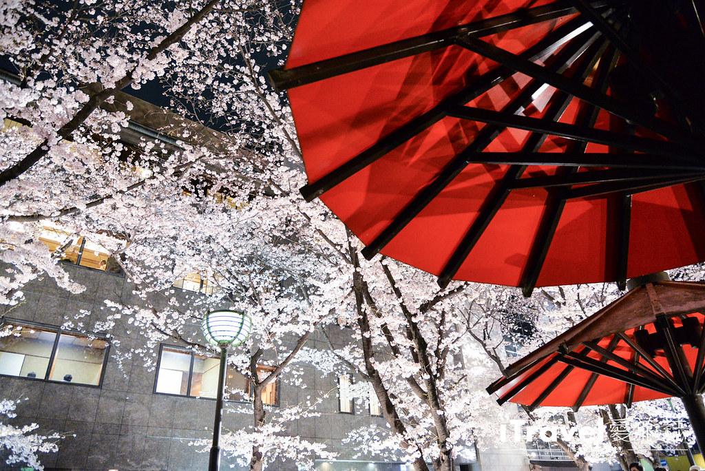 京都赏樱景点 祇园白川 (5)