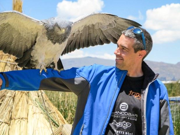 Águila en Perú