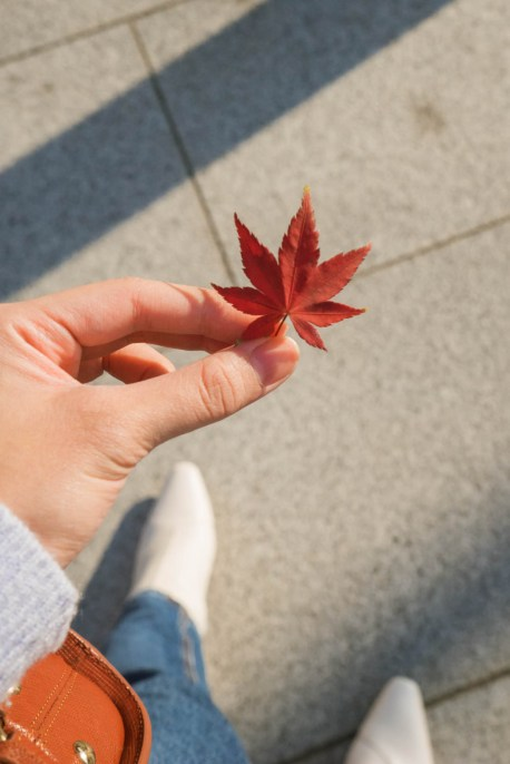 Busan Autumn maple leaf