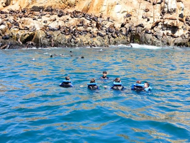 Tour a isla Palomino