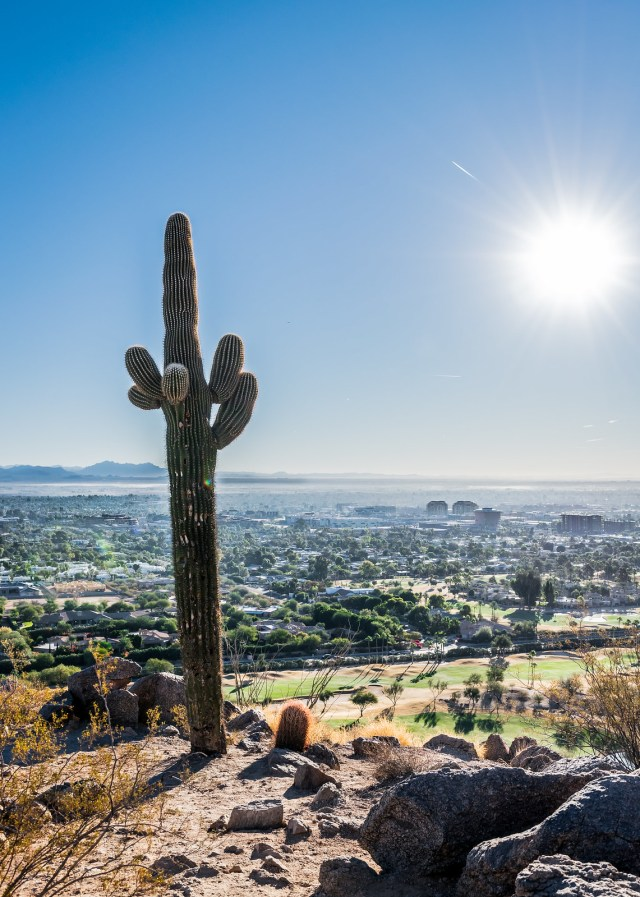 these giant cacti only grow 1 foot every 10 years