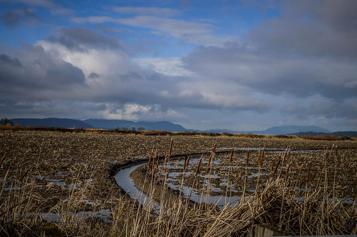 Skagit Valley Flooded Fields-006