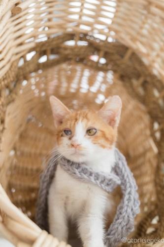 アトリエイエネコ Cat Photographer 39247000914_a346d18828 1日1猫!高槻ねこのおうち 里親様募集中のルルちゃん♪ 1日1猫!  高槻ねこのおうち 里親様募集中 猫写真 猫 子猫 大阪 写真 保護猫 Kitten Cute cat