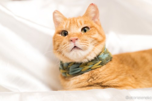 アトリエイエネコ Cat Photographer 25086179887_3286200dde 1日1猫!高槻ねこのおうち「嬉しいこと」 1日1猫!  高槻ねこのおうち 里親様募集中 猫写真 猫 子猫 大阪 写真 保護猫 カメラ Kitten Cute cat