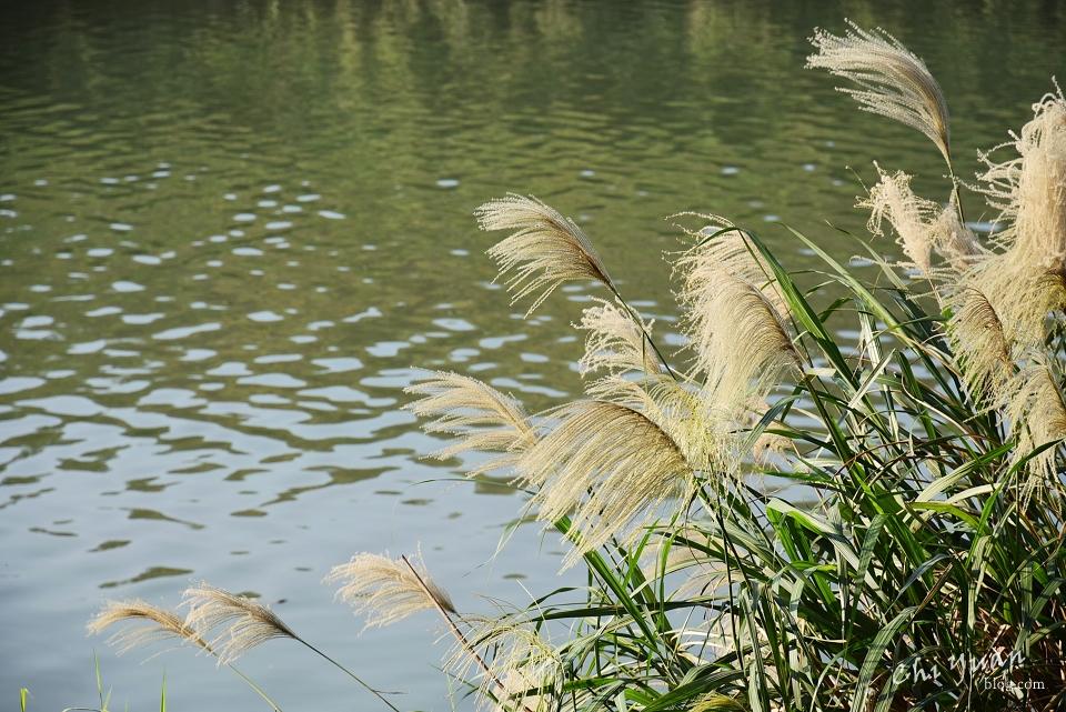 基隆河畔自行車道07.JPG
