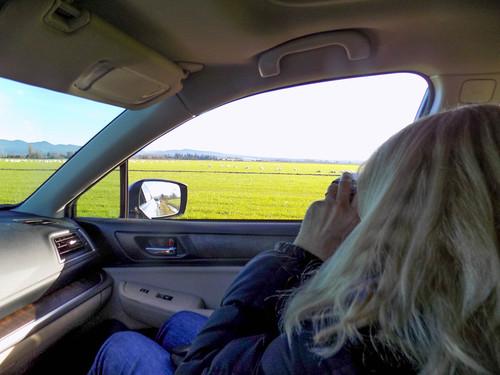 Skagit Bird Watching-4