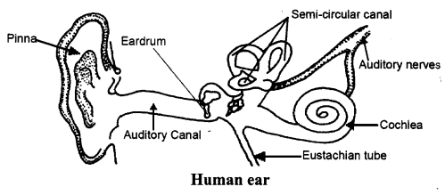 NCERT Solutions for Class 8 Science Chapter 13 Sound ...