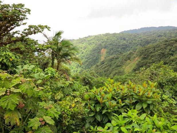 Bosque nuboso en Costa Rica