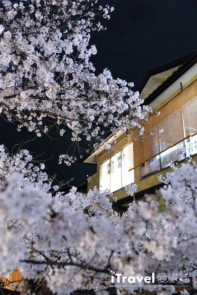 京都赏樱景点 祇园白川 (15)