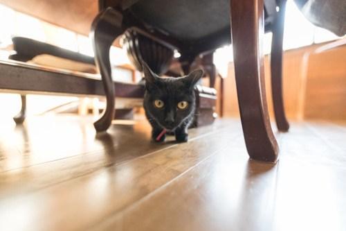 アトリエイエネコ Cat Photographer 38889756745_3d85ef314a 1日1猫!CaraCatCafe 里親募集中の黒猫マックくん 1日1猫!  黒猫 里親様募集中 箕面 猫写真 猫 子猫 大阪 写真 保護猫カフェ 保護猫 スマホ カメラ Kitten Cute cat caracatcafe
