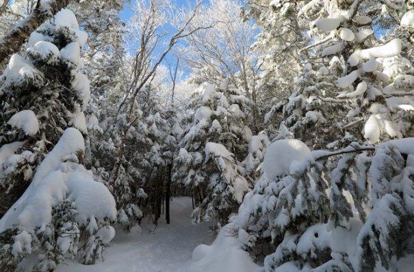 Mt. Tecumseh Winter Hike Climb 2