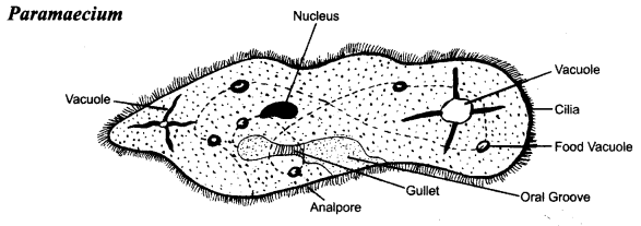 ncert-solutions-for-class-8-science-microorganisms-friend-and-foe-5