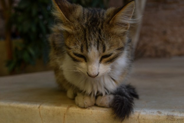 Kitten at El Badi