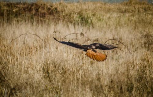 Skagit Bird Watching-14