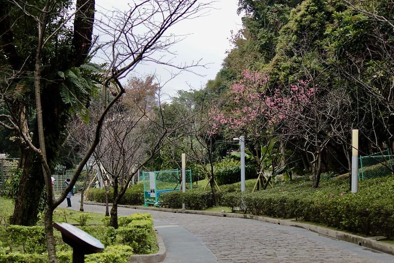中正紀念堂櫻花開了:嫣紅櫻樹上不停歇的繡眼兒 - 開心papago的吃喝玩樂 - udn部落格