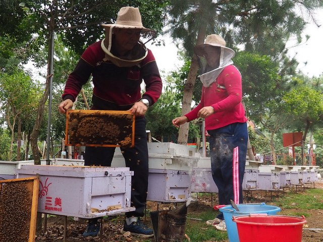 古坑三美養蜂 (13)