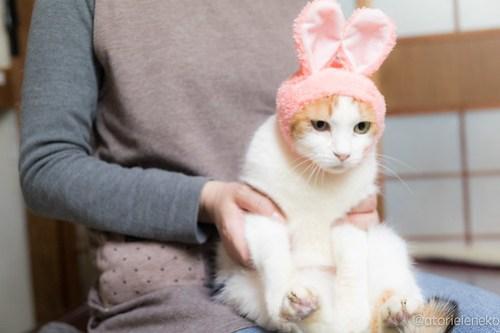 アトリエイエネコ Cat Photographer 28440217449_fccd1b8ca3 1日1猫!おおさかねこ俱楽部 里親様募集中のみのりちゃん🎶 1日1猫!  里親様募集中 猫写真 猫 子猫 大阪 写真 保護猫 おおさかねこ倶楽部 Kitten Cute cat
