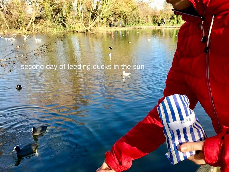 Feeding ducks and sun