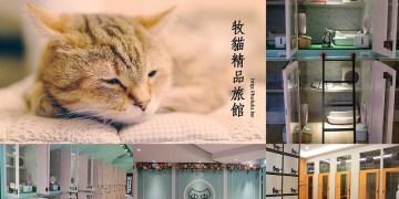 台南貓旅館 主人們放心去旅行吧!結合貓醫生,美容,鮮食的寵物旅館。寶貝貓咪也能有個舒適的空間~「牧貓精品寵物旅館」 文末分享送實木貓碗架 
