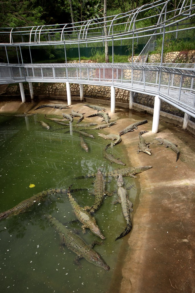 Crocodile Enclosure - Cebu Safari & Adventure Park