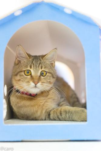 アトリエイエネコ Cat Photographer 27610864129_ac26983775 保護猫カフェ・カーロ