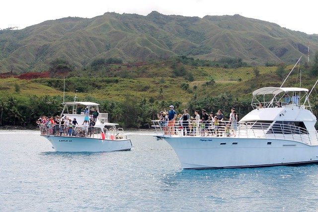 Dolphin Watching Boats