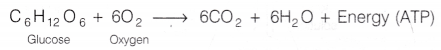 cbse-class-10-science-lab-manual-co2-released-respiration-1
