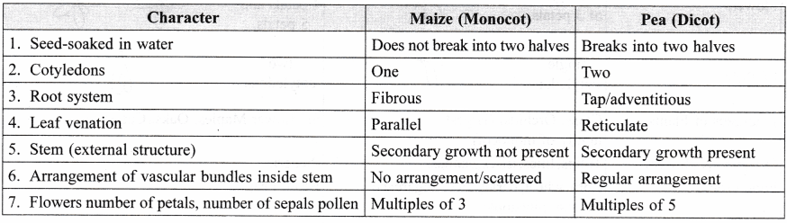 ncert-class-9-science-lab-manual-features-of-monocot-and-dicot-plants-4