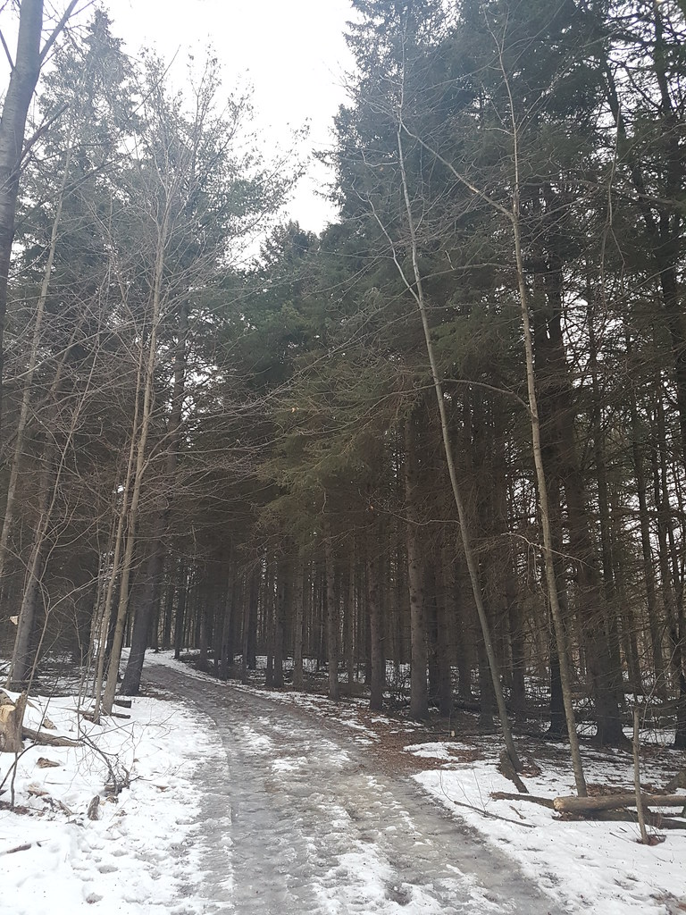 Halton Regional Forest Cox and Britton tracts