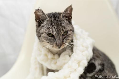 アトリエイエネコ Cat Photographer 39654007972_87a949bb0e 1日1猫!高槻ねこのおうち 里親募集中のミー助君♪ 1日1猫!  高槻ねこのおうち 里親様募集中 猫写真 猫 子猫 大阪 写真 保護猫 スマホ カメラ Lightroom Kitten Cute cat