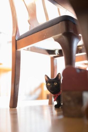 アトリエイエネコ Cat Photographer 38889706355_fb9b83d169 1日1猫!CaraCatCafe 里親募集中の黒猫マックくん 1日1猫!  黒猫 里親様募集中 箕面 猫写真 猫 子猫 大阪 写真 保護猫カフェ 保護猫 スマホ カメラ Kitten Cute cat caracatcafe