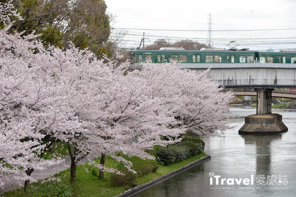 京都赏樱景点 伏见十石舟 (60)