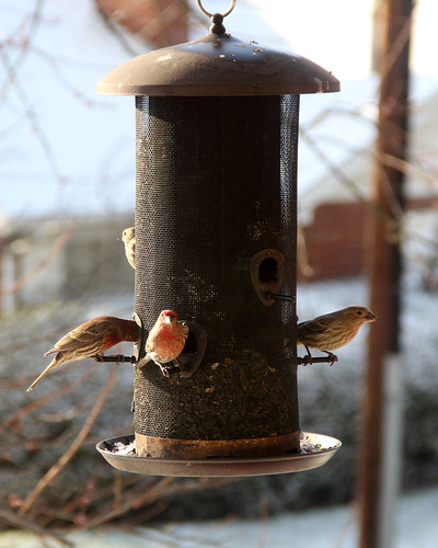 2018-03-13_Birds_62