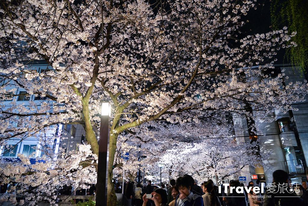 京都赏樱景点 祇园白川 (18)